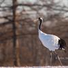 2019年1月7日の鳥撮り(3/3)-遠征最後の探鳥