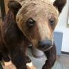 クマが出た!@ノースカスケード国立公園