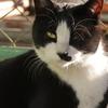 12月11日 錦糸町から亀戸の猫さま とその情景