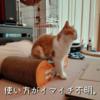 雨田甘夏、アログルです。【猫と毛とアログルーミング事情】