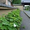 東福寺の参道に咲く芙蓉と木槿。