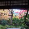 紅葉の京都☆彡撮りっぷツアー その2 瑠璃光院へ