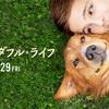 【映画】僕のワンダフルライフ 感想  「とにかく世界で一番大好きなんだ」とあなたの犬は叫んでる。