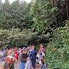 真鶴町岩(真鶴町県行造林)の山林の間伐体験した!