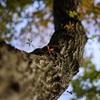 【自然写真…樹木写真】~植物の生き方、生きる様、生命力を伝えたい~