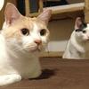 ヒトとネコ、今のところは、一人一匹制度。