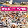 【地震予知】1カ月以内に「東京で震度6超える恐れも」地震学者が首都直下地震を警告+大阪湾に大量のイワシ