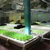 米国の都市型・植物工場アクアポニクス施設を運営するNPOが資金調達を開始