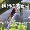 【レッドビーシュリンプ】抱卵の舞とは?時期や温度は関係ある?