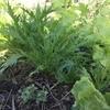【お花畑のような野菜畑を目指しますっ!!】