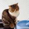 ペット給水器 ペットと飼い主が実際に使って選んだベスト3!