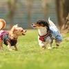 向山雄治の愛犬よんくろと散歩でリフレッシュ!おすすめスポットをご紹介!☆彡