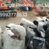 {Tips to Choose} Packers and Movers Rajkot