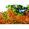 晩秋の信夫山・カメラ散歩 ––– 福島の「ふるさとの山」を歩く