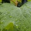 雨に思う ~クルマは僕の一部~
