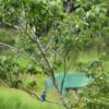 photo D <時の彼方に> senjinsennin 2020年6月05日 高鍋湿原