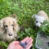 ブルーベリーと芝生