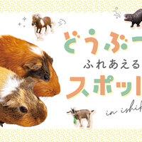 【石川・金沢】動物とふれあえるスポットまとめ!キュートなどうぶつたちに会いに行こう!