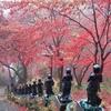 散歩~大山(おおやま)で紅葉を楽しみハイキング