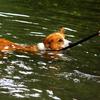 川遊びの写真たちです!
