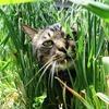 草をはむ猫