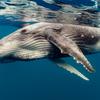 シャチとザトウクジラの確執?