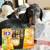 バブ「至福の柑橘めぐり浴」とブー