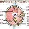 筋肉を分化・統合して動かす手続き概要