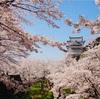 津山城 鶴山公園【津山市】岡山県屈指の桜(昼間・日の入前・ライトアップ)を堪能してきました!