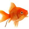 自分がもし、サークルの「金魚のフン」だと感じたら即刻辞めるべきだ。