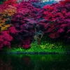 東北の紅葉は早い!Takmar 55mm F1.8で撮った「弘前城 菊と紅葉まつり」の写真24枚