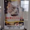 日本で一番新しい映画館!シネマネコ(青梅)