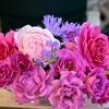 強香のバラ3種(アイル,レスポワール,プラム・グレイ)
