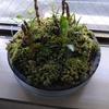 市民館の窓辺、嬉しい春の演出