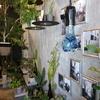 川越の植物ブランド ~ KIYOU KAWASHIMA
