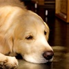 犬がいい子に育つ。環境の大切さ。