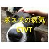 ソイドッグ3頭のボス犬が病気(CTVT)になっていた