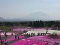 ピンクの絨毯が埋め尽くす芝桜のスポット 羊山公園と富士芝桜