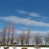 【貴重な青空】雪の公園に行ってみる