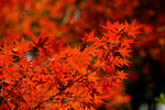 秋の紅葉を存分に楽しむには、京都より奈良がおすすめな4つの理由