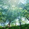 甲木★樹木の質