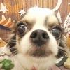 関内のわんだふるで愛犬のトリミングと恒例の写真撮影会