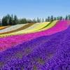 ANA修行と旅行 神戸ー新千歳ルートにこだわる3つの理由