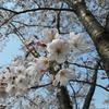 刈谷市「よさみガーデンマルシェ」とお花見