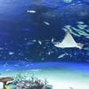 🐟サンシャイン水族館 2016年10月訪問です