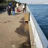 安城店 釣場調査 碧南海釣り公園 レジャーフィッシング