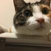愛猫日記#1
