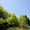 新緑の季節、青と緑。
