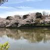 【お花見】今年は団子より花!【鎌倉】