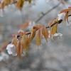 tochikoな山歩き 花と滴